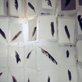 Detail of feather's collected on site and made into curtain cubicle