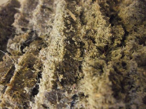 sliced dust bread detail